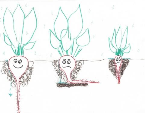 soil_ink_li